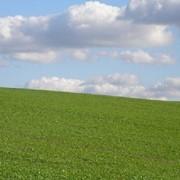 Предоставление земельных участков в аренду фото