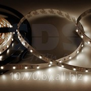 LED лента открытая, IP23, SMD 3528, 60 диодов/метр, 12V, цвет светодиодов белый NEON-NIGHT фото