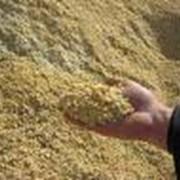 Покупка зерна и подсолнечника фото