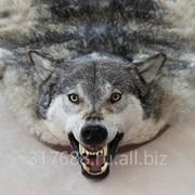 Сырье шкуры волка под заказ фото