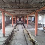 Продам хозяйство в Днепропетровске фото