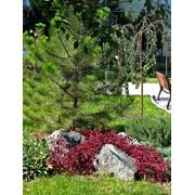 Создание сенсорного сада №13 фото