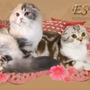 Регистрация питомника кошек при клубе Фелина фото