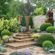 Проектирование сада по фэн-шуй фото