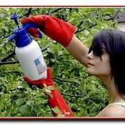 Средства защиты растений от вредителей фото