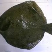 Камбала фото