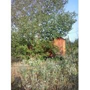 Дача, участок, земля Алматинская область Станция Шамалган 12 соток фото