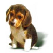 Экстренная ветеринарная помощь круглосуточно. фото