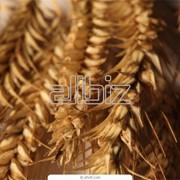 Сельскохозяйственная продукция фотография