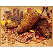 Орехи кедр фото