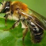Питательные вещества для пчел фото