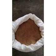 Пшеница зерноотход, зерно для кур, 1кг фото