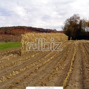Земли фермерского хозяйства фото