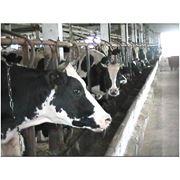 Ветеринарные препараты для скота фото