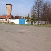 Объект недвижимости 24 гектара Киевская область, свиноферма фото