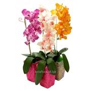 Орхидея искусственная в горшке декорированном БФ90016 фото