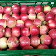 Яблоки Kортланд 70+ фото