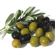 Оливки и маслины фото