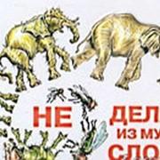 """Магнит прикол объёмный """"Не делай из мухи слона"""" фото"""