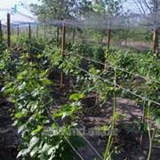 Проволока оцинкованная для виноградников в Молдове фото