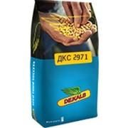 Насіння кукурудзи Монсанто DKC2971 укр., міш фото