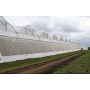 Сетка Solarig Anti Insect Net 50 mesh фото