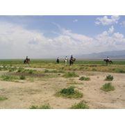 Туризм на лошадях фото