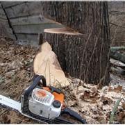 Валка деревьев частями фото