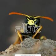 Препараты для пчел фото