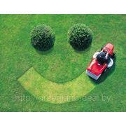 Создание газонов и озеленение фото