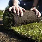Укладка рулонных газонов с полной подготовкой фото