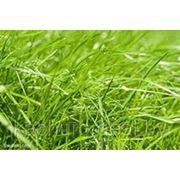 Посадка и уход сеяного газона фото