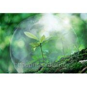Учет объектов растительного мира фото