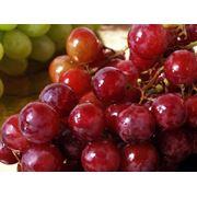 Виноградное масло косметическое фото