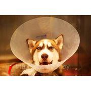 Уретростомия коту (собаке) фото