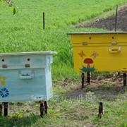 """Улей с пчелами """"Украинский лежак"""", Киев и область фото"""