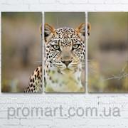 Модульна картина на полотні Леопард код КМ6090-092 фото