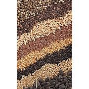 Услуги сортировки мелкосемянных масличных и овощных культур фото