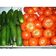Овощи тепличные фото