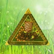 Ядро кедрового ореха. фото