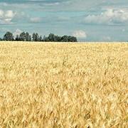 Колхоз в Одесской области фото