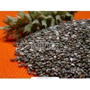 Пакетированные семена фото