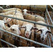 Применение вспученного вермикулита в животноводстве фото