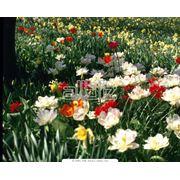 Цветы однолетние фото