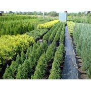 Растения декоративные для озеленения фото