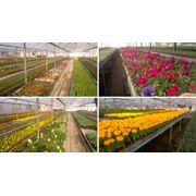 Рассада цветов для озеленения и благоустройства фото