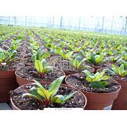 Растения тепличные фото