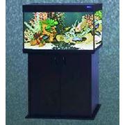 Стеклянный аквариум фото