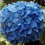 Удобрение Агроприрост для цветов (биогумус) 36 л фото