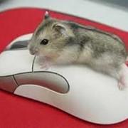 Мыши в ассортименте фото